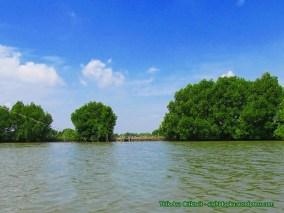 Hutan mangrove_1