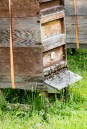 Bee Hive - Erddig