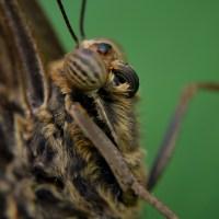 Urlaubstagebuch Teil 4: Der Schmetterlingspark