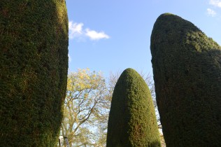 The finished yews.