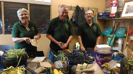 Pat, John and John bagging up runner beans