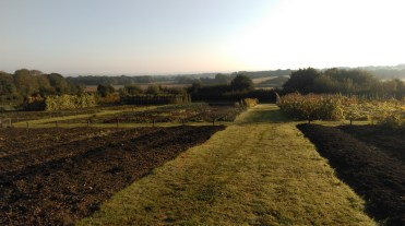 Mulched beds can be seen on the right of this picture and beds awaiting to be mulched on the left