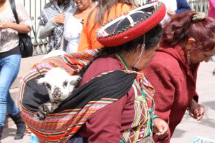 Rarely is a Peruvian woman's shawl without signs of life