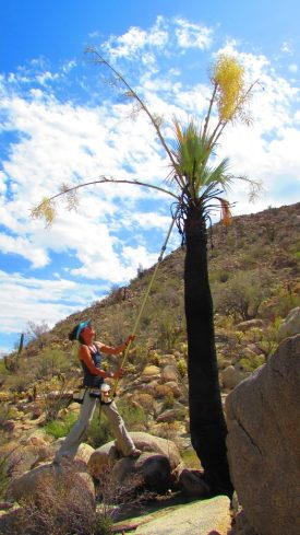 A woman wearing athletic clothes, a headband, and a tool belt pulls on a strap attached to a palm tree in the desert.