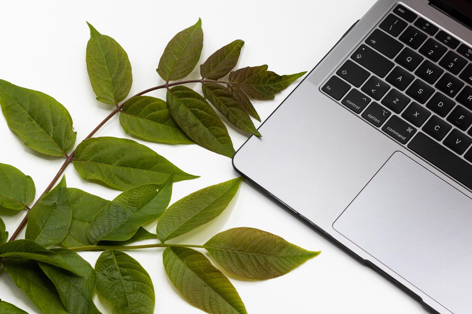 A couple sprigs of green leafy plants are on a white surface next to an open laptop.