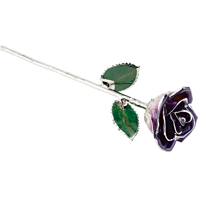Purple Rose With Platinum Trim