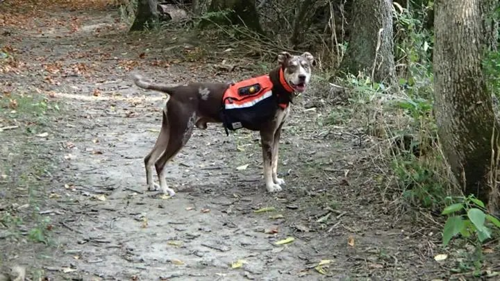 Ranger carrying his backpack on a hike.