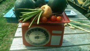 Weighing in todays produce of a globe carrot, gem squash and cherry tomatos