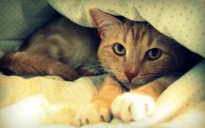 cat-in-blanket-wide