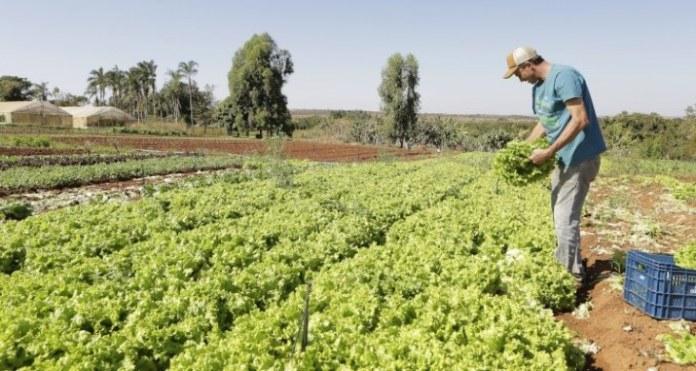 Agricultura familiar