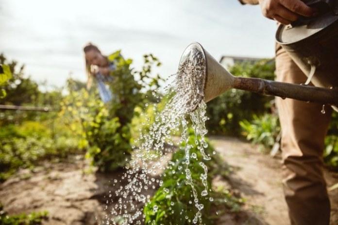 Pátria Voluntária contribui para fortalecimento dos pequenos agricultores