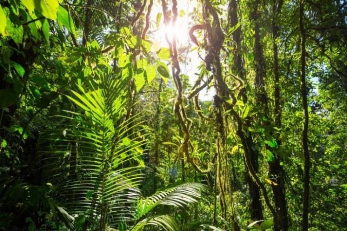 Cursos do Serviço Florestal Brasileiro estão com as inscrições abertas