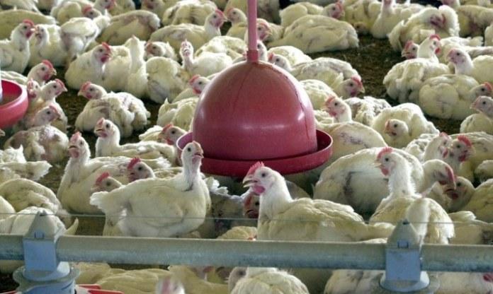 Nota do Ministério da Agricultura sobre coronavírus em ave exportada para a China