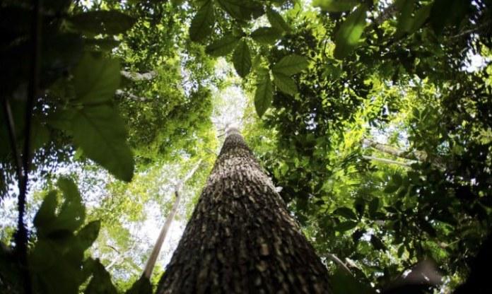 Floresta + Carbono incentiva conservação de vegetação nativa