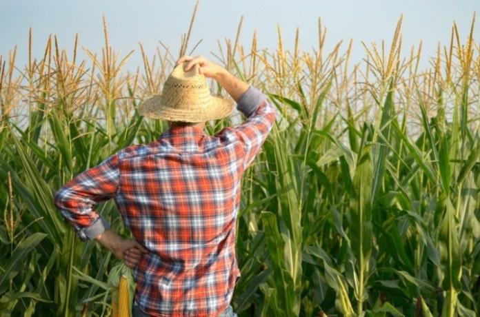 Seguro rural teve adesão de quase 10 mil produtores do Pronaf