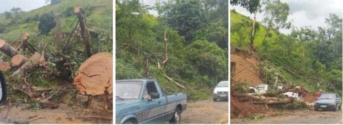 Queda de árvores em Alegre, ES — Foto: Graziela Rocha Figueiredo