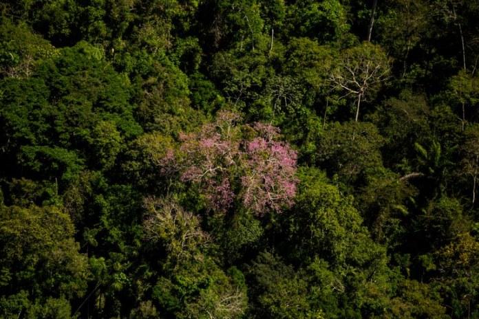 parna_juruena_Thiago Foresti-25.jpg