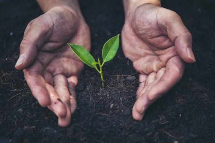 Plano quer reduzir emissão de carbono na agropecuária na próxima década