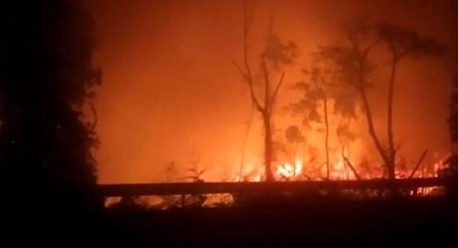 Incêndio destruiu uma área particular de mata em Sooretama
