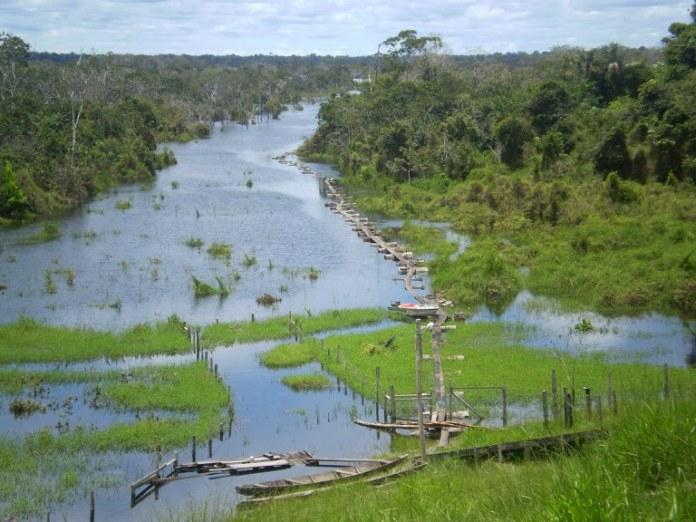 Estudos de concessão para o manejo sustentável em cinco florestas têm início