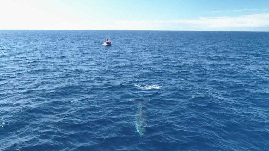 Baleias são registradas passando pelo litoral do Espírito Santo — Foto: Reprodução/ TV Gazeta