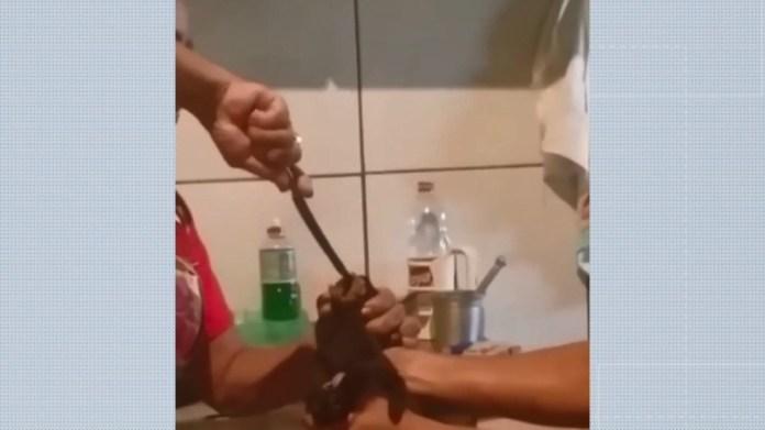 Mulher usa faca para obrigar gato comer carne apimentada no ES — Foto: Reprodução/ Redes Sociais