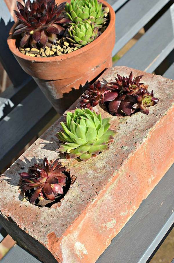 Cactus And Succulents Care
