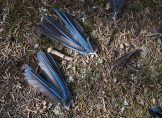 The wings were all that was left of a mysterious bluebird that the Columbine Elementary School students found on one of their adventures. The Catamount Center practices a leave-no-trace policy, which gave instructors an opportunity to teach these concepts and examine Mother Nature up close.