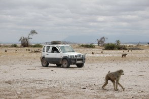 Studying baboons in Amboseli National Park. Submitted by Susan Alberts.
