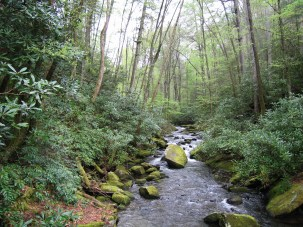 The Little Santeelah River flowing through the Joyce Kilmer Memorial Forest within the Nantahala National Forest in western NC (photo by E.S. Bernhardt)