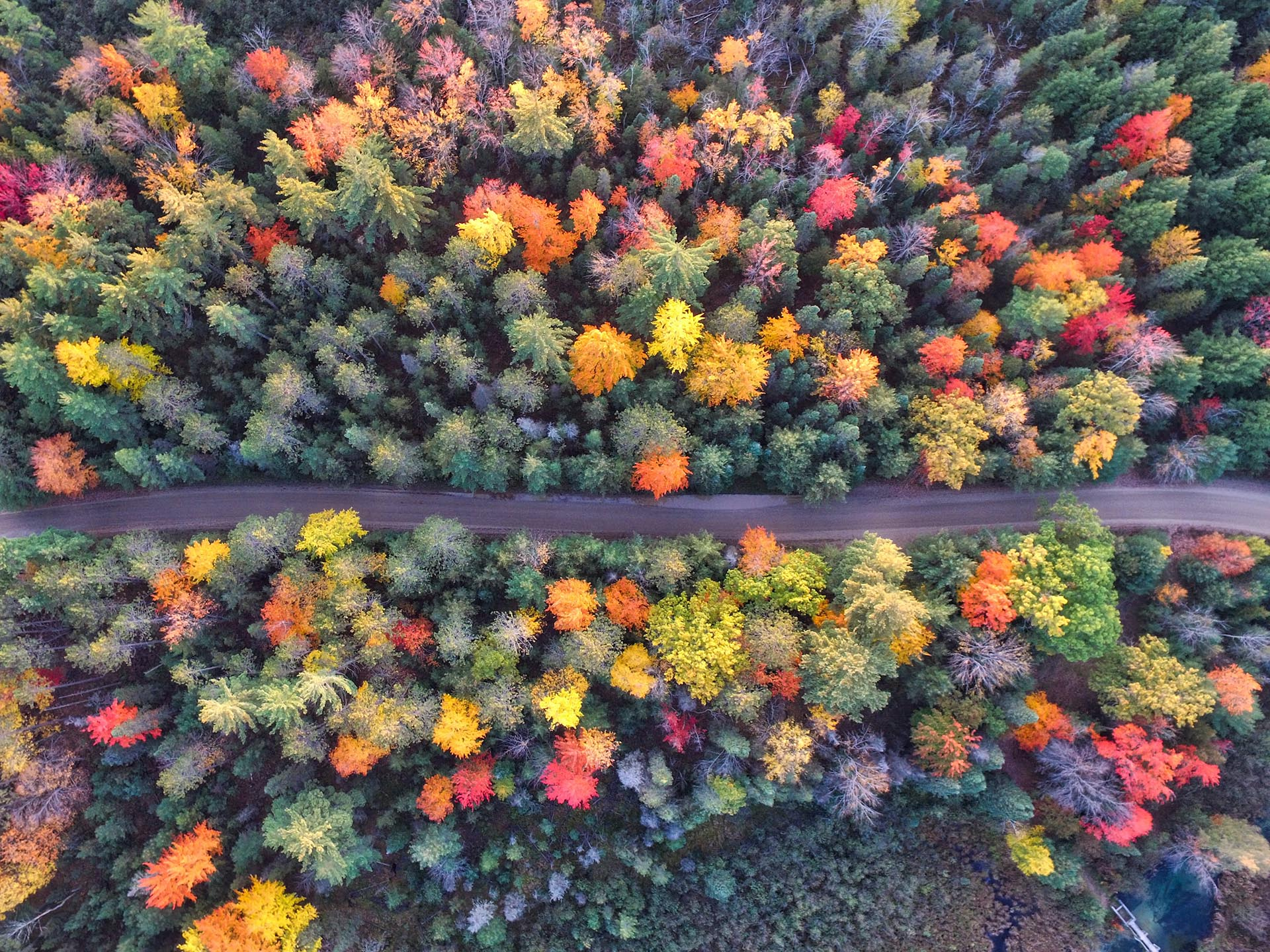 Ariel shot of trees and a road during autumn