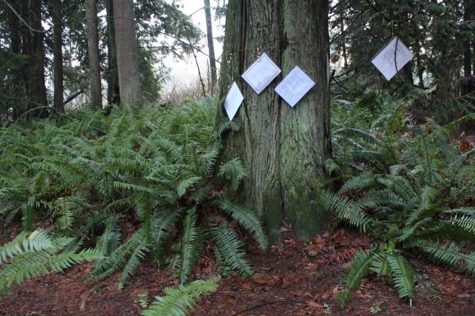 Han Shan Poems in Trees