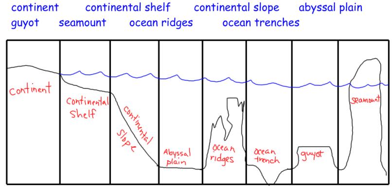 Picture Of Ocean Floor Diagram Imaganationface