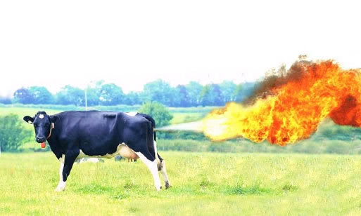 Cow Farts and Global Warming - kciglobalwarming