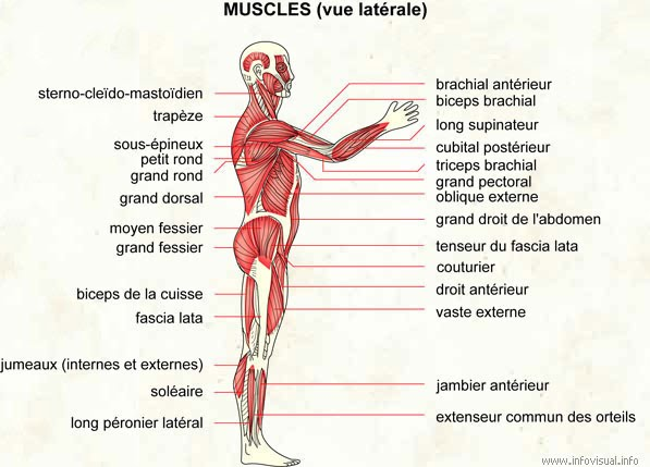 Page III Musculation Pour Tous