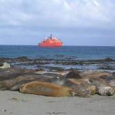 Elephant seals and Aurora Australis