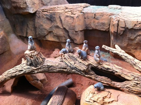 062712 Lab Outing_meercats2