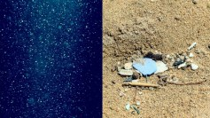 Marine snow and microplastics