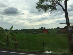 Common sights while driving through Bali