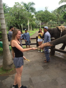Feeding elephants coconut palm bark