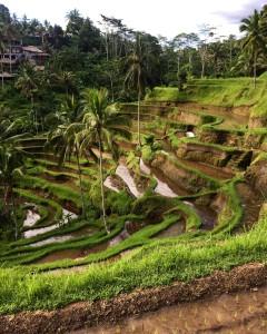Teagallang Rice Terrace