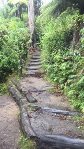 Steps throughout the Redwood Forest