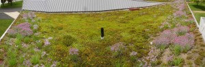 Green Roof East Side