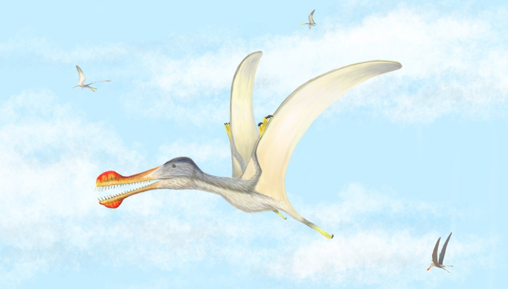Aerial predator: the toothed pterosaur Anhanguera soars over an ancient river system. Fossils of several different flying reptiles have been described from Morocco's Kem Kem beds. (Artwork by Megan Jacobs)