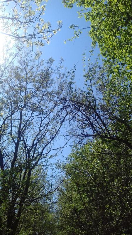 Cer pictat în frunze-Pleșa Andreea