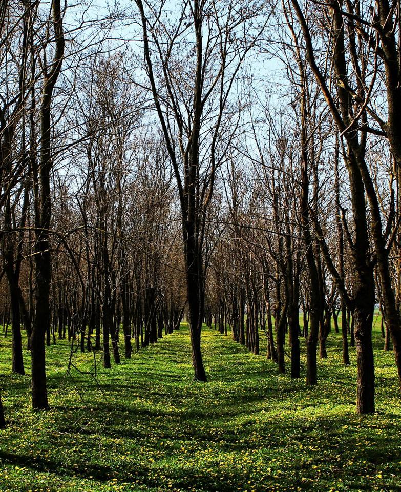 Copacii fără pădure-Ciobotaru Andreea