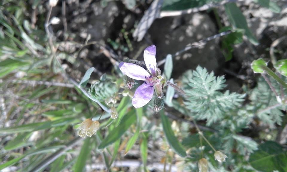 Fabrica de polen-Bugia Denisa