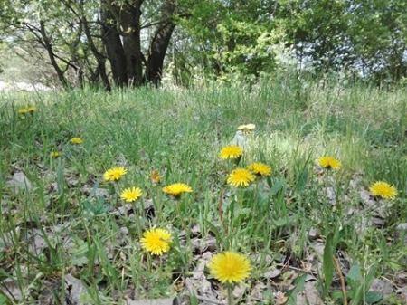 Poiana florilor-Șoga Valentina