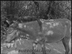 burro falante