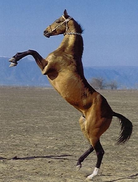 Как отучить лошадь кусаться